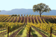 Enjoy Harvest Season In Sonoma With These Activities