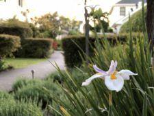 Flower among greenery