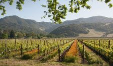 Vineyard at the base of the majestic Mayacamas Mountains