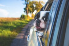 Four-Legged Sonoma: Dog Friendly Wineries & Activities