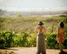 Sonoma Harvest Celebrations & Events