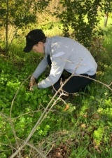 Edible Excursions: Foraging in Your Own Backyard