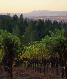 Choose Your Sonoma Harvest Adventure
