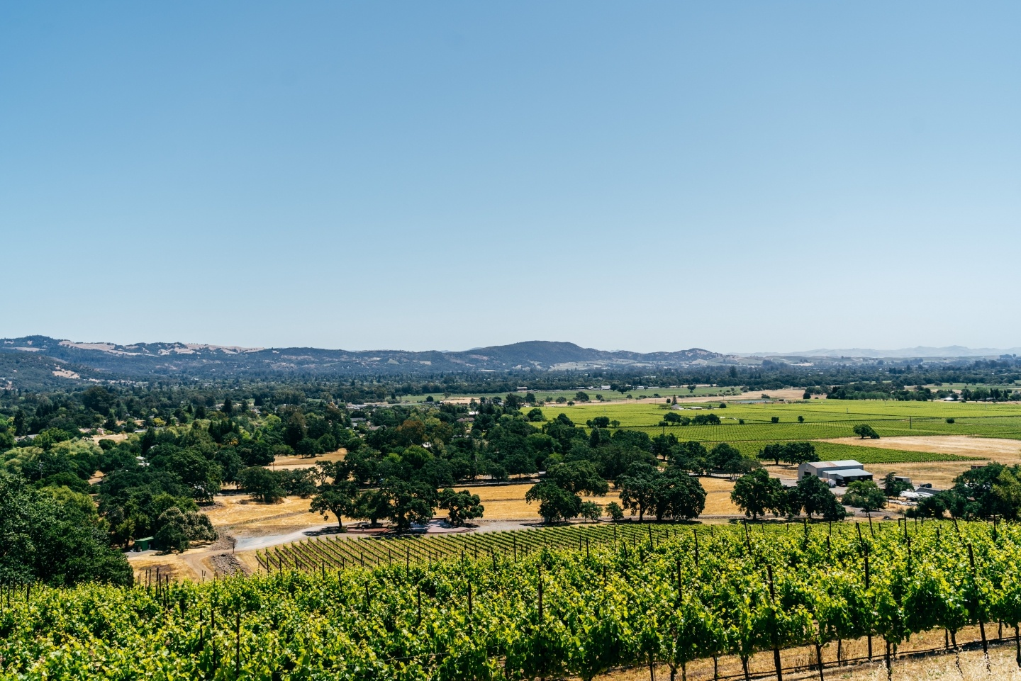 View from Durell Vineyard in Sonoma